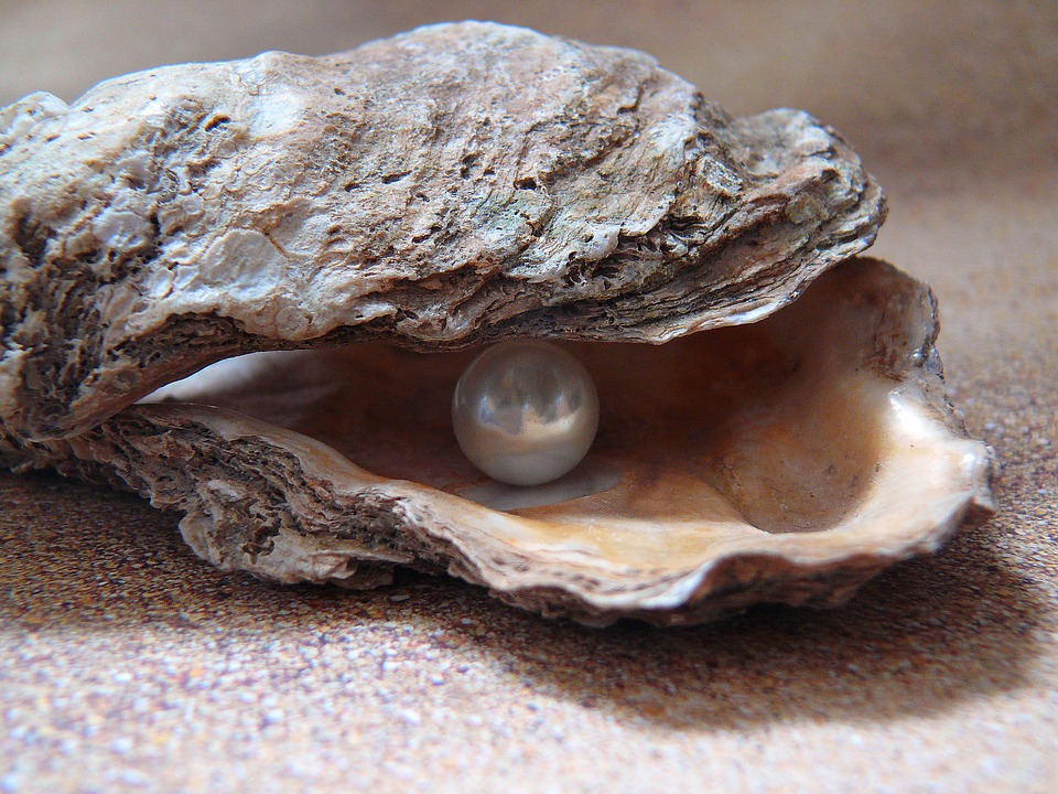 oyster-1327311_960_720